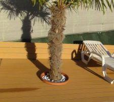 Le palmier pour un air exotique, il est planté à même le sol, j'ai découpé le bord du bac pour cacher la découpe des lames composite.