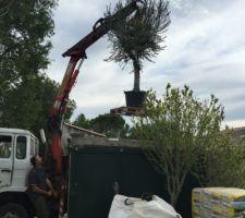Livraison olivier