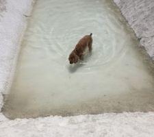 La première à se baigner.