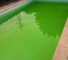 Piscine Eau verte remplie d'algues