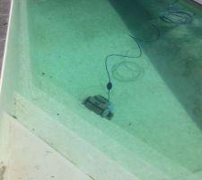 Le premier baigneur  !  eau à 12 °C , le petit DOLHIN monte quand même les murs et les marches