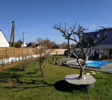 Cyprès enlevés, clôture en place