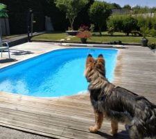 Le chien admire sa piscine...