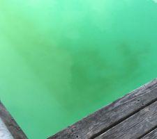 Algues fond côté grand bassin (160 cm)