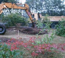 Désouchage de tous les arbres abattus