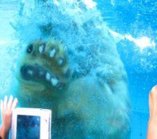 Mon ours est tombé dans l'eau !