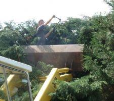 La coupe des arbres apres 12 ans de pousse ....jamais taille quel horreur